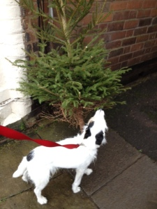 Max sniffing out the old year